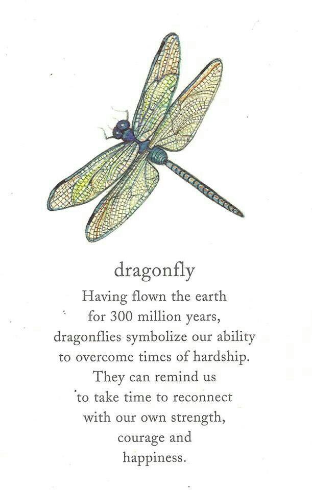 Dragonfly. Dragonfly SymbolismDragonfly QuotesDragonfly Meaning  SpiritualDragonfly ...