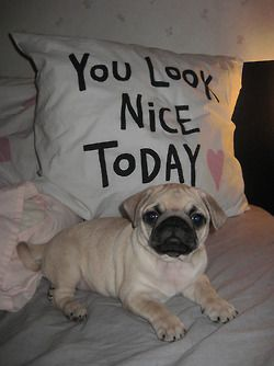 Self-esteem boosting pug not in clothes. | I Love Pugs ...