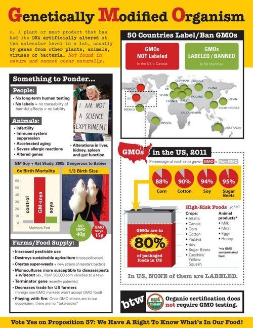 companies should put labels if their using genetically modified organisms Still, with the growing use of genetically modified food, some question the safety of the technology and argue consumers have a right to know exactly how their food is produced whether gm food poses health risks or not, the question for lawmakers has been, what level of government is responsible for what goes on food labels.