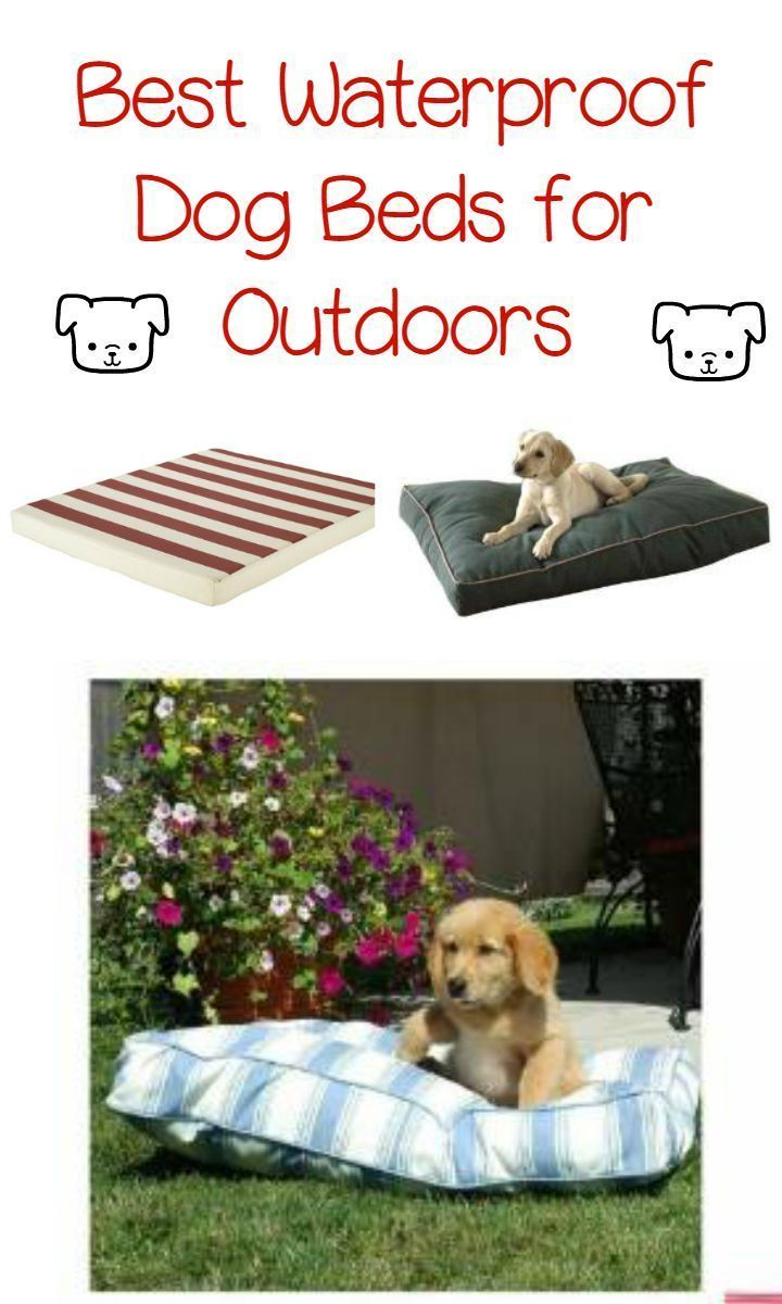 Keep your canine companion comfy out on the deck without worrying about sudden changes in the weather with these best waterproof dog beds for outdoors.