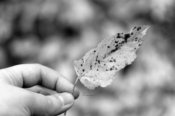 Touch of Autumn   by Siniirr
