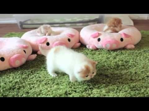 Sevimli Kedi Yavruları Uyuklarken