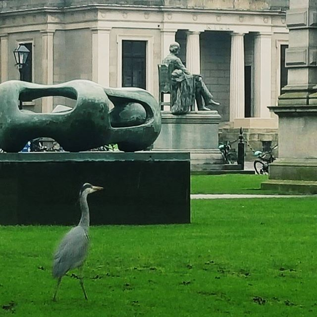 Saw this visitor on campus today enjoying the scenery! #trinitycollegedublin #heron #birds #birdwatch #trinitycampus