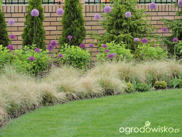 Zielonej ogrodniczki marzenie o zielonym ogrodzie - strona 694 - Forum ogrodnicze - Ogrodowisko