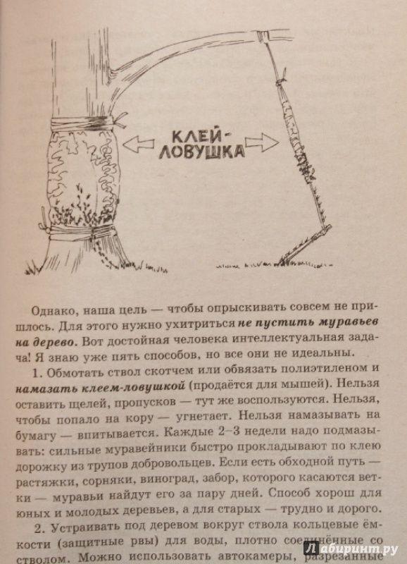 Иллюстрация 5 из 12 для Умный сад в подробностях - Николай Курдюмов | Лабиринт - книги. Источник: Остапчук  Дарья