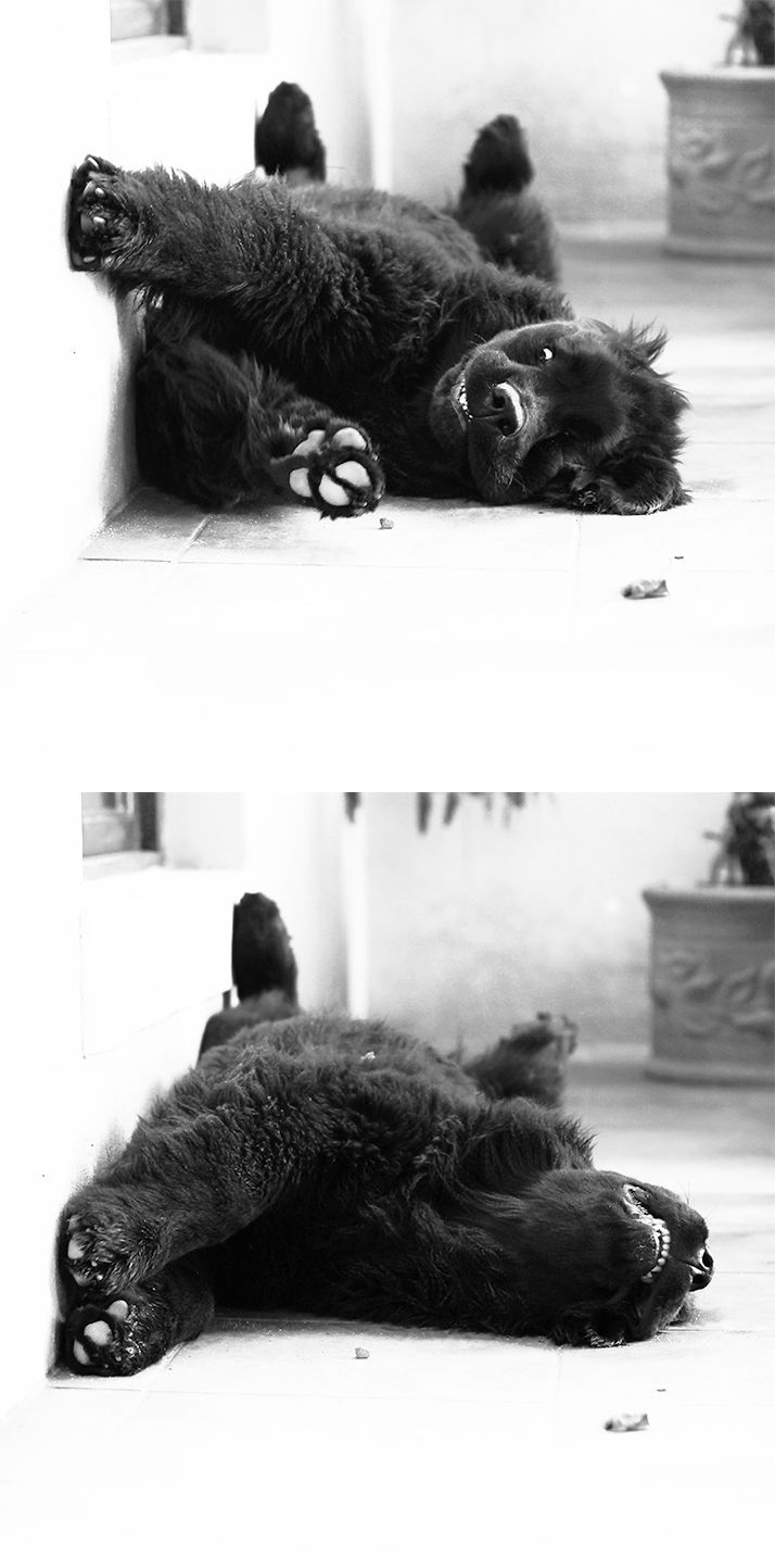 puppy stretch:)