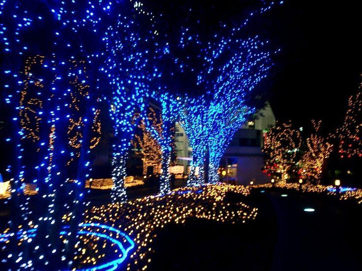 10 best christmas lights images on pinterest christmas lights bright christmas lights bright colors aloadofball Images