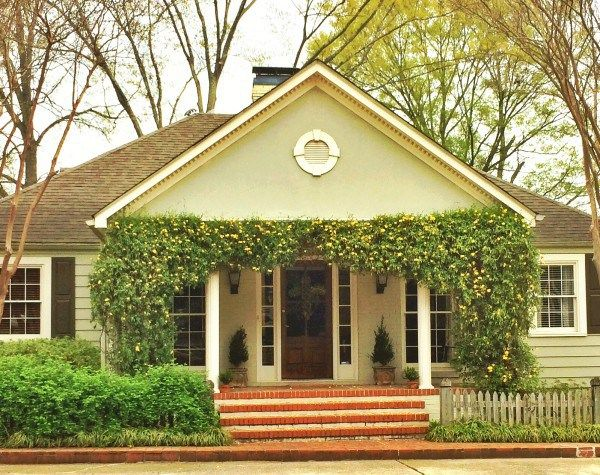 Three our favorite vines to boost your home's curb appeal.