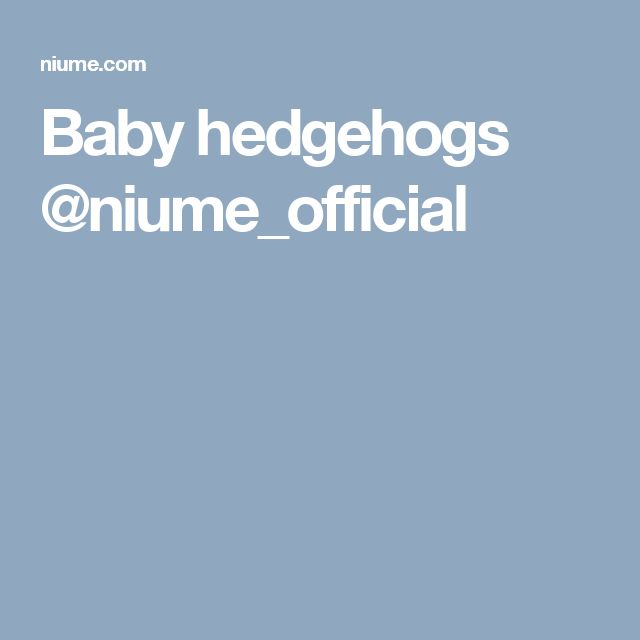 Baby hedgehogs @niume_official