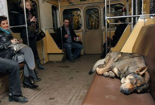 Many commuters don't seem to mind giving up their seats to the dogs.