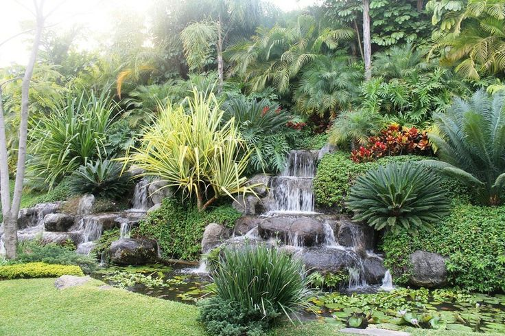 116 best ideas about real palm trees pond landscaping on for Tropical garden designs