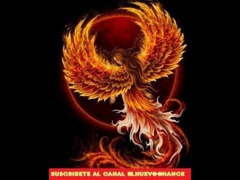 Horóscopo Chino 2017   Predicciones signo por signo Año del Gallo 2017