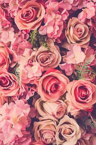 Pink Roses Bouquet Fresh iPhone 5 Wallpaper