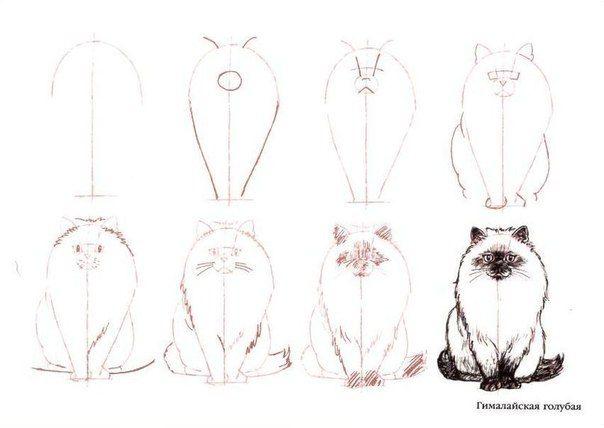 354 best apprendre a dessiner images on Pinterest