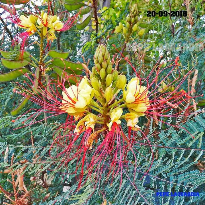 What flower is that? Banksia?