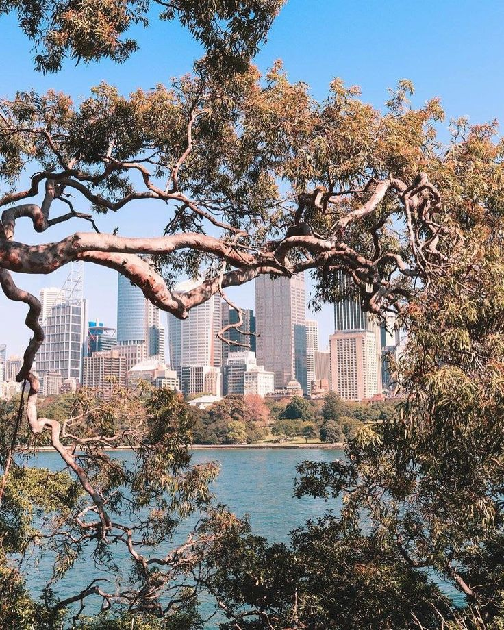 @courtneygaye_travels #courtneygaye_travels #Sydney #SydneyHarbour #photography #Canonphotography #gumtree #SydneyBotanicalGardens