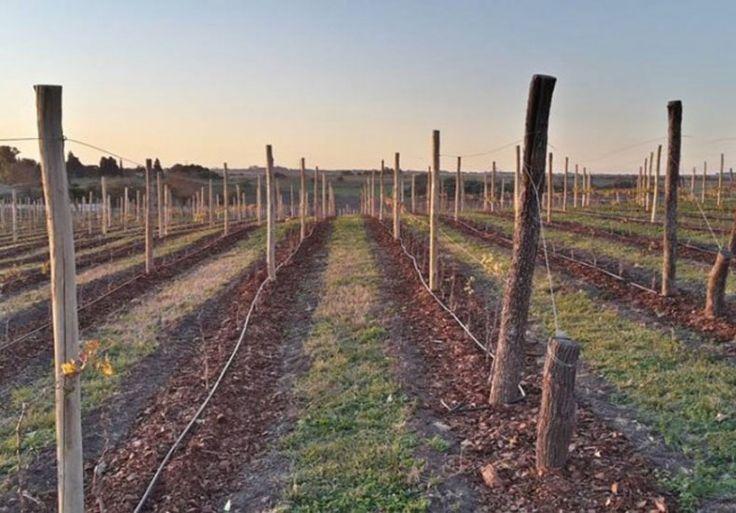 La ruta del vino entrerriano se instala como opción para combinar el descanso y la buena mesa.