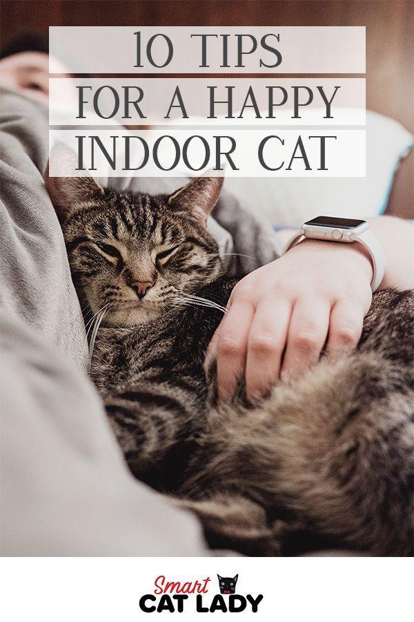 10 Tips For A Happy Indoor Cat Indoor Cat Cat Care Tips Cat Parenting