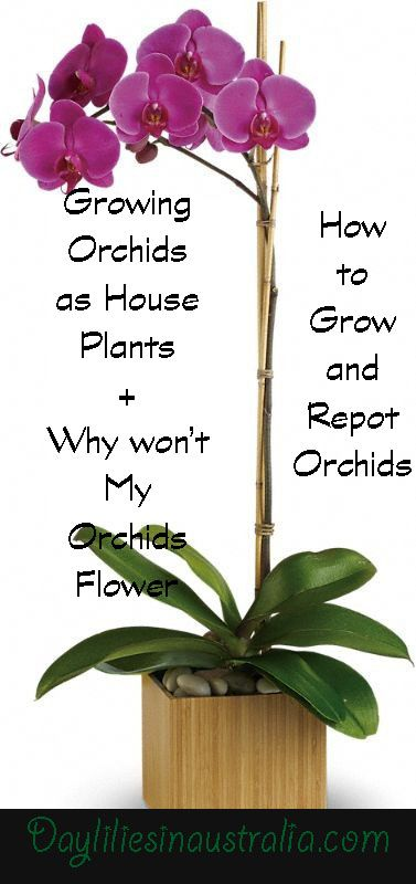 All you need to know about Orchids Diseases to Why won't my Orchids Flower..