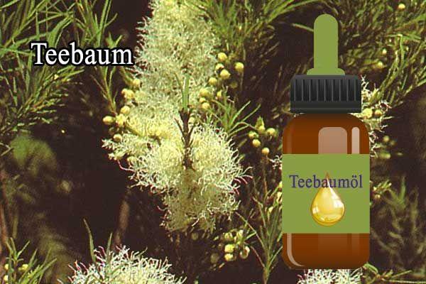 Teebaum Öl als Nagelpilz Hausmittel