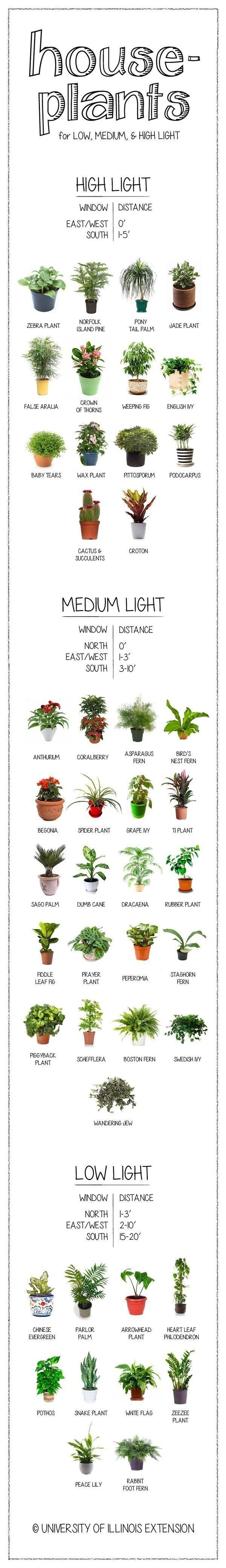 So useful right now: a visual guide to houseplants, according to their need for light. #Planting #DIY #Ideas RealPalmTrees.com New Ideas #palmtrees #creative #GreatView #CoolPlants #Plants #homeIdeas #Outdoorliving #2015