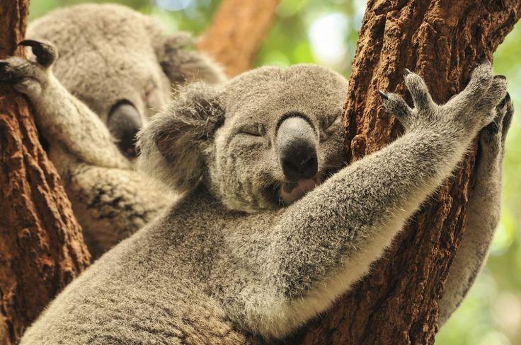 Direction … L'Australie ! - Blog voyage Evaneos   Blog voyage Evaneos
