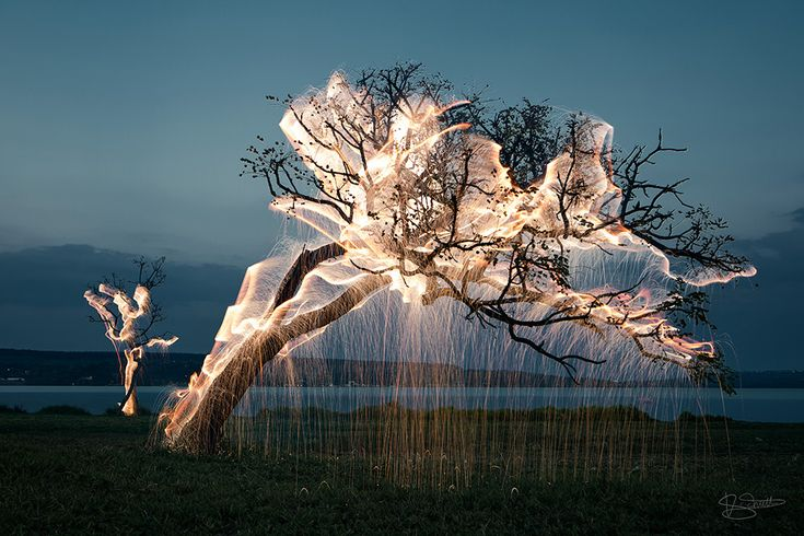 Mesmerizing photos of light dripping from trees by Vitor Schietti - Cube Breaker