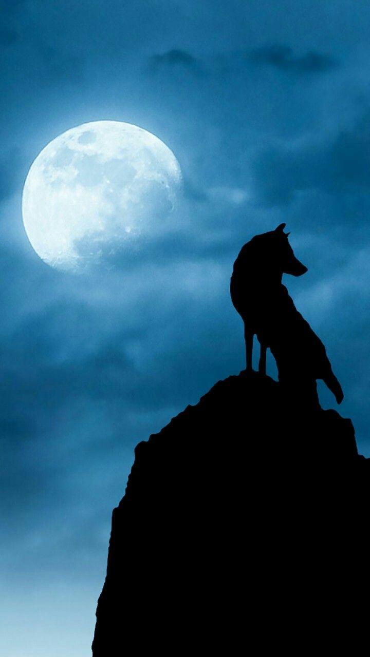 オオカミ おしゃれまとめの人気アイデア Pinterest Imaimari 狼月