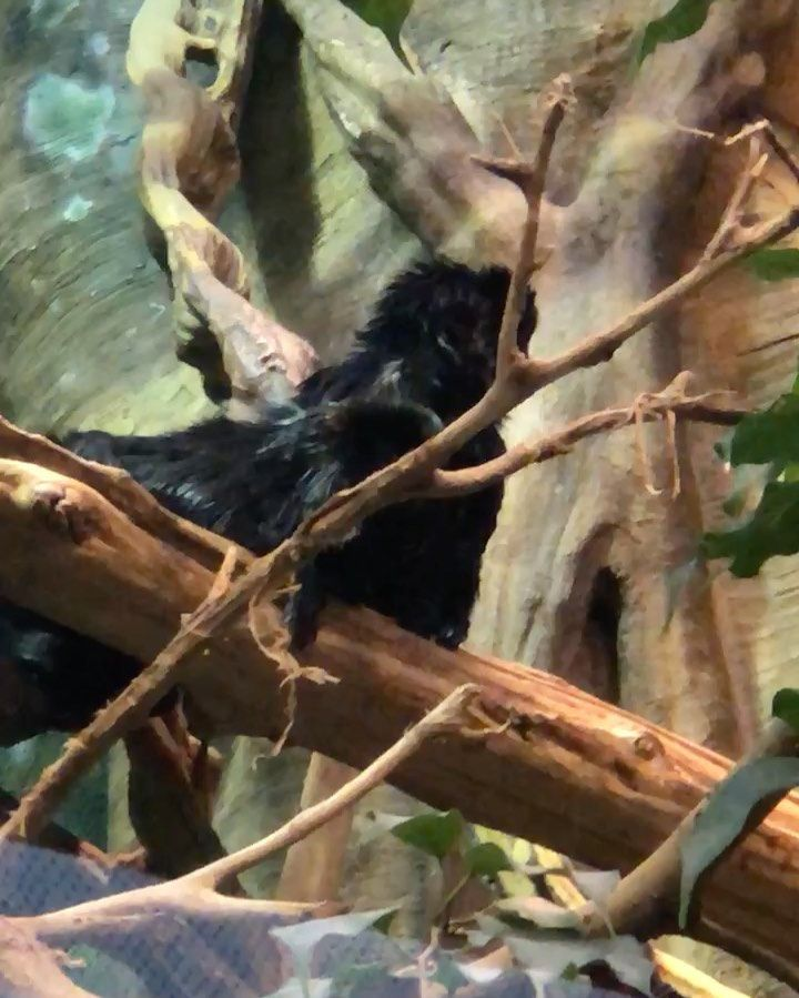 Monkeys Changos Changuitos Aquariumn Acuario Animals Animales