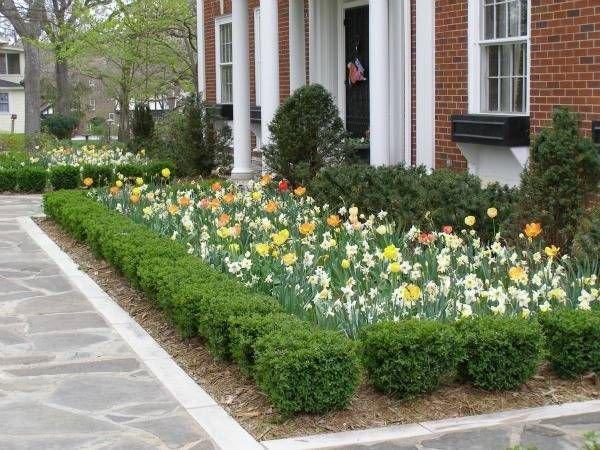 17 best ideas about dwarf boxwood on pinterest boxwood for Landscaping rocks des moines