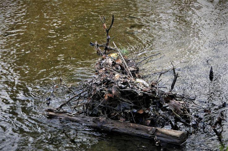 Korb – Ein 11 Jahre alter Junge wurde am Mittwochmorgen gegen 07:45 Uhr am Seeplatz in Korb von einem Unbekannten ins Wasser gestoßen. Der Bub hatte sich am Seeplatz auf seinem Fahrrad sitzend weiter lesen