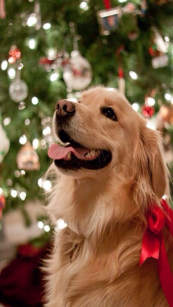 Iphone Wallpaper Christmas Tjn Christmas Animals Cute Golden Retriever Wallpapers Wallpaper Cave Dog W In 2020 Golden Retriever Dogs Golden Retriever Retriever Puppy