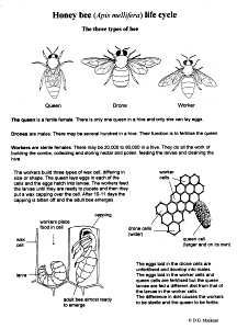 Tons of scientific drawings of insects, etc.