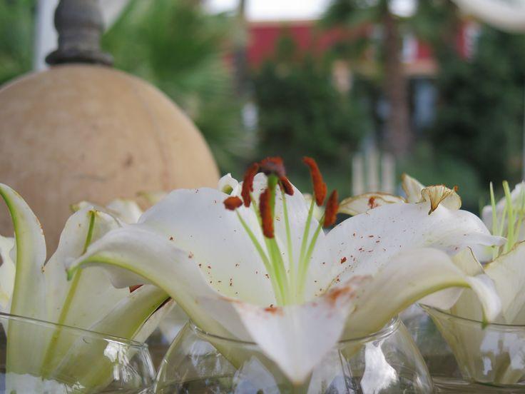 Jardines Boabdil #Boabdil #bodas #granada #boabdilbodas #bodaengranada #jardines #boabdileventos