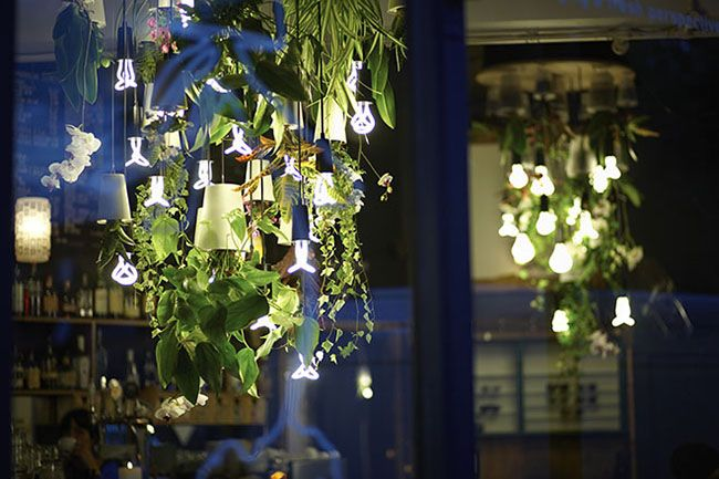 This upside-down indoor plant pot will transform the way you hang your plants in the home, and you'll love the new and unique view of your plants. The unique design flips the traditional plant pot on
