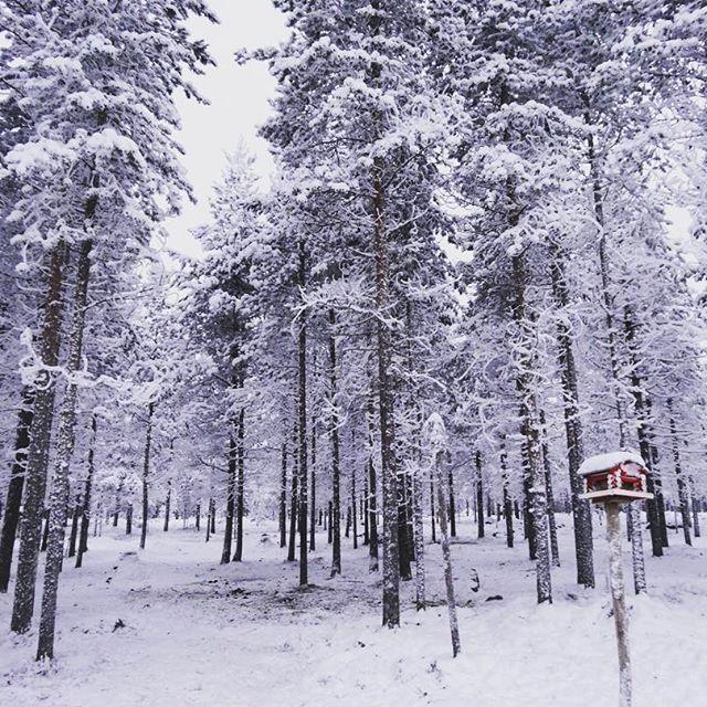 【nonno_nzmi】さんのInstagramをピンしています。 《もう一度行きたい国ランキング第1位(タイ)フィンランド❄️写真を同期したら昔のが出てきた。次はどこ行こうかな〜。 #この後トナカイのソリでサンタ村に行きました #トナカイけっこうお年を召してた #冬景色 #銀世界 #フィンランド #ラップランド #ロヴァニエミ #北欧 #森 #静寂 #finland #rovaniemi #snowland #lapland #memorabletrip #silent #forest》