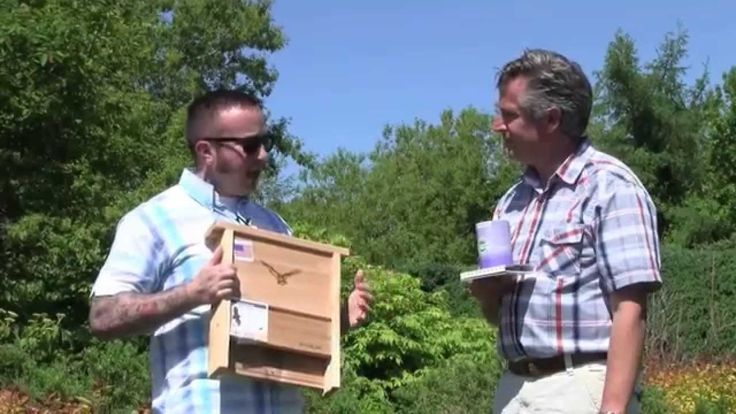 Attracting Bats And Bees To Your Garden