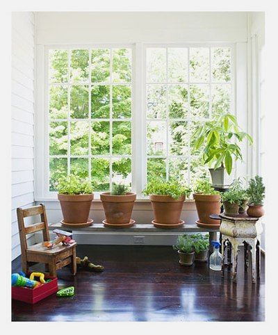 17 best images about plantas interior on pinterest ps - Plantas interior resistentes ...