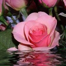 Resultado de imagen de fotos de hermosas ventanas con flores