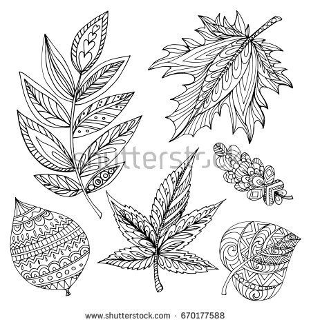 Collection of decorative autumn leaves of different trees (oak, linden, maple, acacia) hand draw in vector. Coloring page