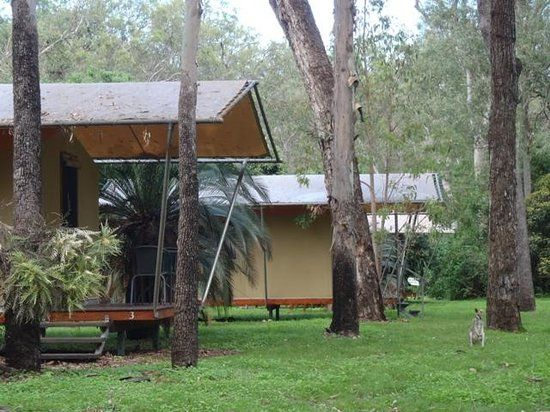 Takarakka Bush Resort, Queensland: See 193 traveller reviews, 137 candid photos, and great deals for Takarakka Bush Resort, ranked #399 of 1,964 Speciality lodging in Queensland and rated 4.5 of 5 at TripAdvisor.