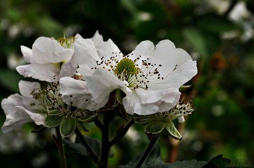 Disse a flor para o pequeno príncipe: é preciso que eu suporte duas ou três larvas se quiser conhecer as borboletas. -Antoine de Saint-Exupéry -