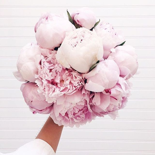 The Pink Peonies 131 best peony images on pinterest | peony, friends family and flowers