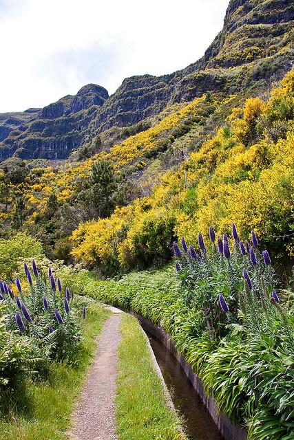 Levada das Rabacas, Madeira.