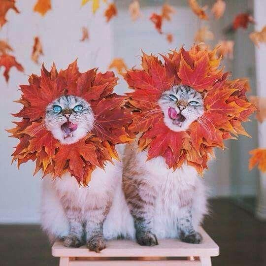 Fall cats