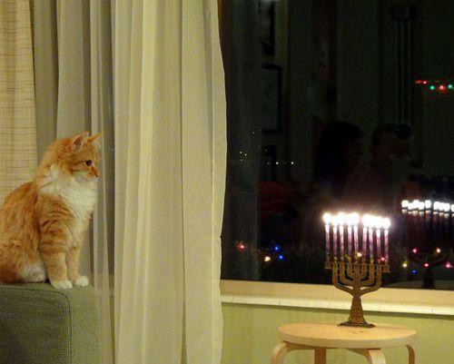Willow kitteh enjoys the menorah. #cat #humor #cats #funny #quotes #cute #lolcats =^..^= www.zazzle.com/kittyprettygifts #catsfunnytumblr Willow kitteh enjoys the menorah. <a class=