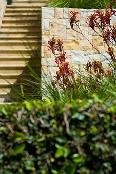 I'd love to see Kangaroo Paws shown up in front of the sandstone