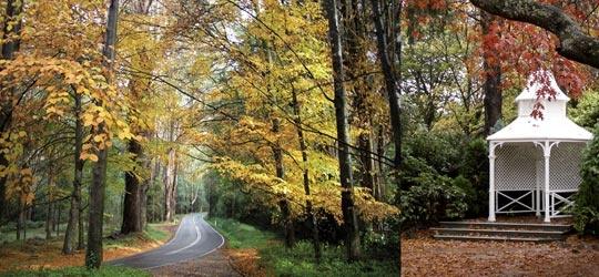 Poet's Lane