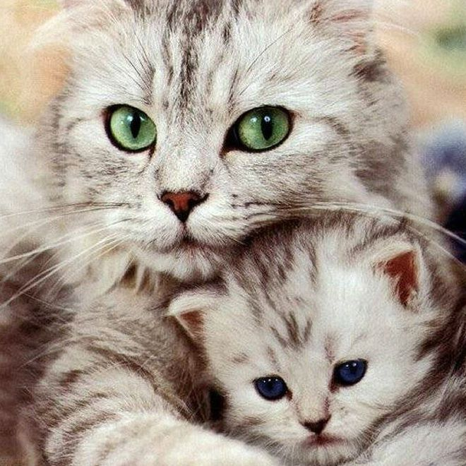 https://i.pinimg.com/736x/b8/99/11/b89911a756bd36664e1434d4d8dc8da2--cat-grooming-crazy-cat-lady.jpg