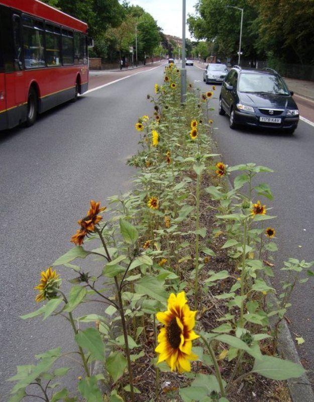 Secret Gardening Movement Uses Plants As Nature's Graffiti